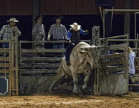Yeehaw! It's time to hit the rodeo at Westgate River Ranch & Rodeo in Florida