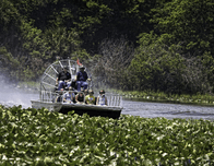 Explore Florida's Unique Ecology with a Swamp Buggy Ride at Westgate River Ranch & Rodeo