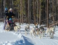 Snow Mountain Ranch Dogsled Ride