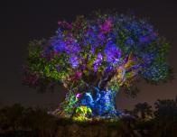 The Tree of Life Illuminates Disney's Animal Kingdom