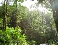 Tropical forest in Martinique near fond St-Denis