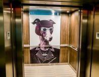 Unusual Elevator Passenger - Photo: Steven Soblick