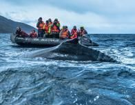 Whale Watching from Zodiac Boat