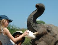 girl feeding elephant in kenya