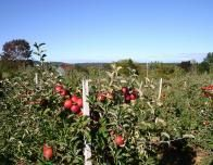 Spend a Fall day at an apple orchard and show the kids where their food comes from.