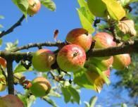 Let's go apple picking at some of the best orchards in the country.