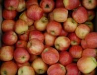 Fresh apples are perfect for a snack or pie or lunch box treat.