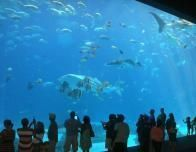 See one of the largest Aquariums in the world in Atlanta