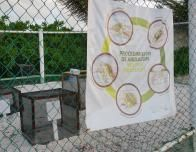 Guests can volunteer to help protect turtle nests on Playa Petempich.