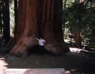 Grace_Giantus_Sequoia