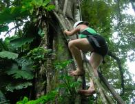 19_-_Climbing_in_Rainforest