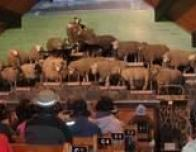 SheepandDogshow