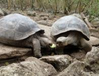 marissa_turtles