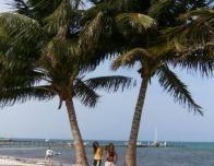 coconuts_