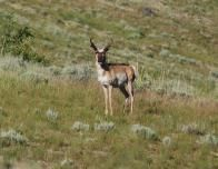 Out_West_2010_078