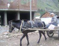 HorseCart