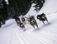 Dog sledding in the hills of Breckenridge, Colorado