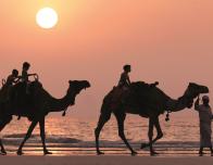Kid's Camel Ride at Sunset, Ritz Carlton Dubai