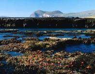 Galapagos_Islands_water_525243121