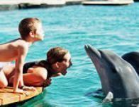 eilat_dolphin_swim_696107135