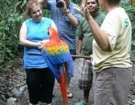 Meeting a Macaw at Osa Wildlife Sanctuary