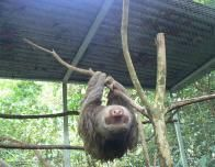 Sloth at Osa Wildlife Sanctuary