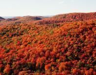 Colorful_Mountainside_Trees_628690726