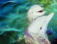 dolphin1_426001133