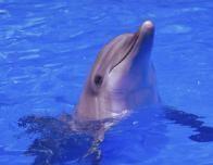 dolphin2_452440778