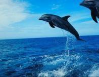 dolphin3_393701470