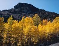 Fall foliage along the Blue Ridge Parkway in Virginia.