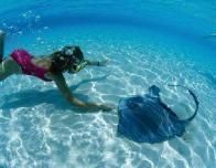 jamaica_sting_rays_984085331