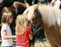 Go Horseback Riding at Mackinac Island
