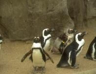 penguins_378391210