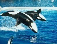 whale_480094256