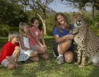 SanDiegoAnimalEncounterCheetah_307791038