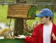 amazon_ariau_guests_monkeys_833042927