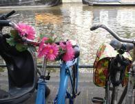 amsterdam_bikes_681894288