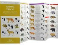 animaltracks_433483759