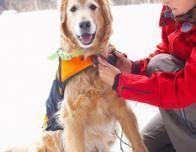 dog_ski_resorts_482499516