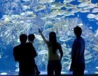 valencia_oceanographic_city_aquarium_542039457