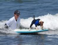 loews_coronado_dog_murphy_960960321