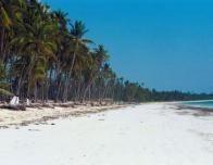 blue_sky_palm_trees_beach