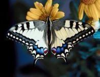 butterfly_809621940