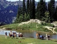 hikers_llamas_394779000