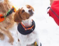 snowfall_dog_booties_481671996