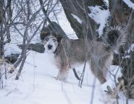 snowfall_terrier_669927557