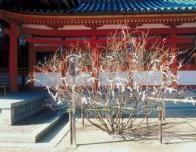 tree_pagoda_japan_262400464