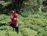 Rainforest Canopy Tour