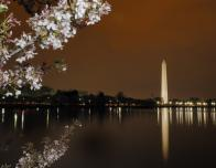 National Mall at dusk with cherry blossoms
